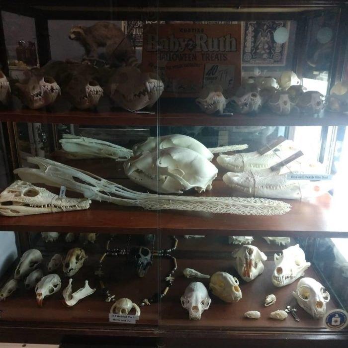 Voodoo's Odd Shop Is Best Oddity Shop In Nebraska
