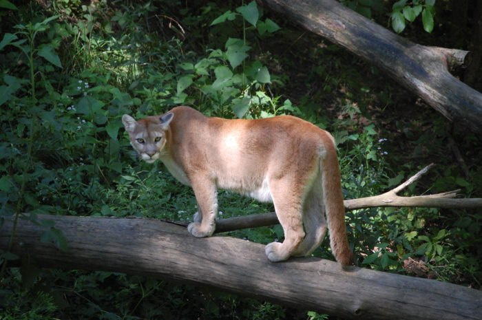 5 Craziest Animal Sightings In New York To Know About