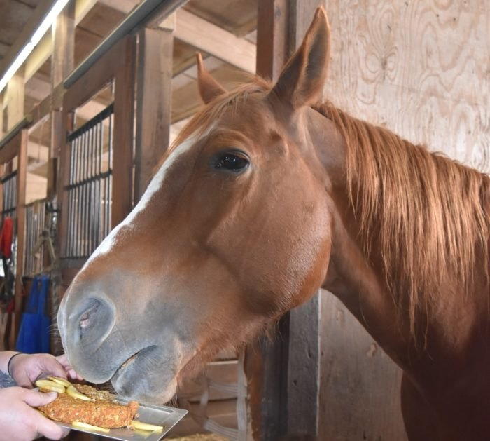 Illinois Horse Rescue In Beecher, Illinois Is A Horse ...