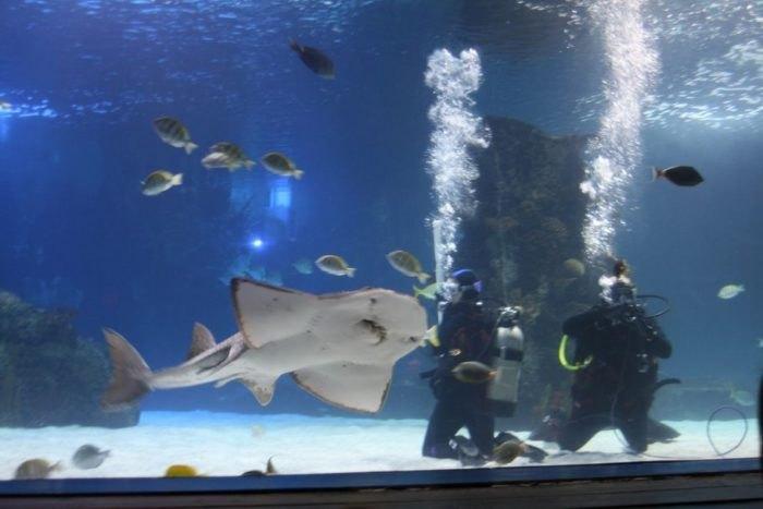 Newport Aquarium Is A One-Of-A-Kind Destination In Kentucky