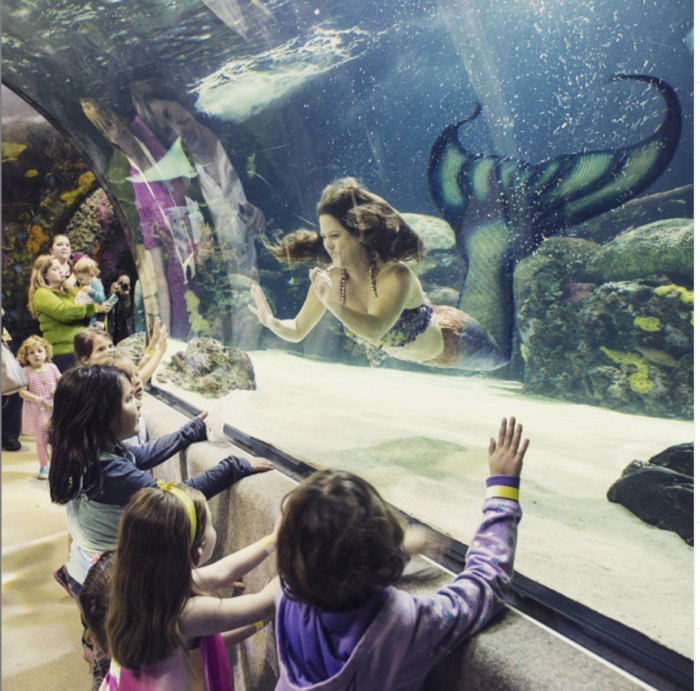 The Virginia Aquarium Is The Perfect Destination For The Whole Family