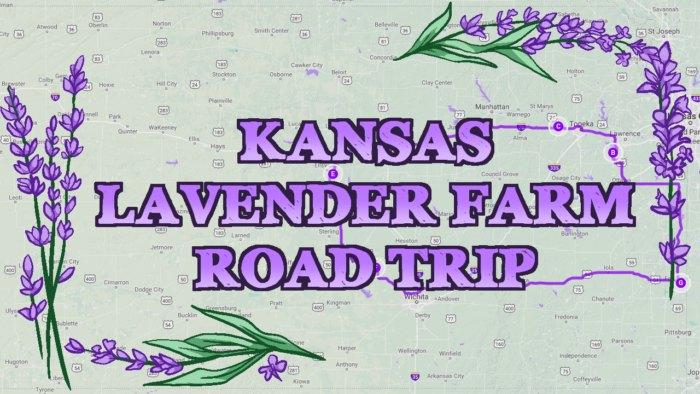 6 Lavender Fields In Kansas On One Road Trip