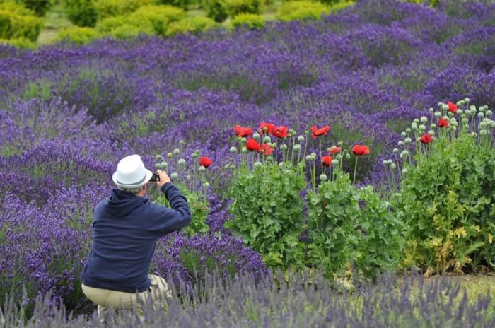 The Sequim Lavender Festival In Washington Belongs On Your