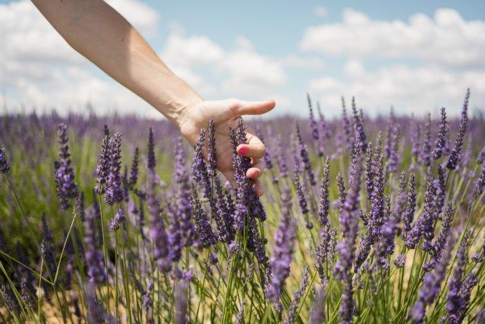 Massachusetts' Annual Lavender Festival Is Happening In Holden