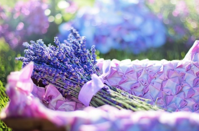 Visit Lavender Essentials Of Vermont Lavender Farm