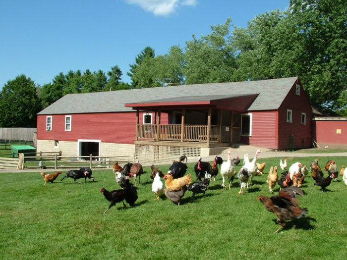 The Friendly Farm's Petting Zoo In New Hampshire Is Worth A