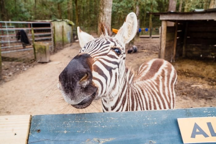 Bee City Interactive Zoo In South Carolina Is One Of The