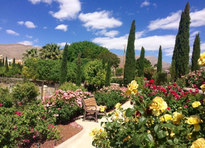 There S A Beautiful Rose Garden Hiding In El Paso Texas