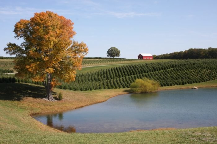 Pine Valley Farms: A Maryland Christmas Tree Farm With 110 ...