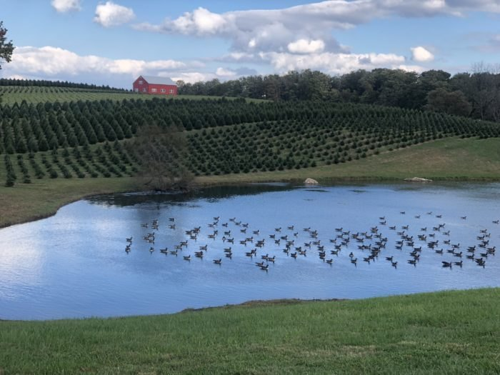 Pine Valley Farms: A Maryland Christmas Tree Farm With 110