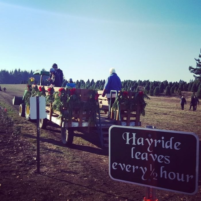 Get Your Christmas Tree At Redland Family Farm In Oregon