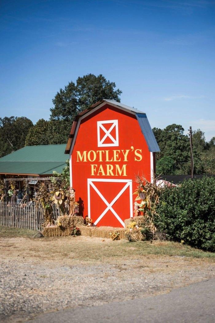 Motley's Tree Farm Arkansas