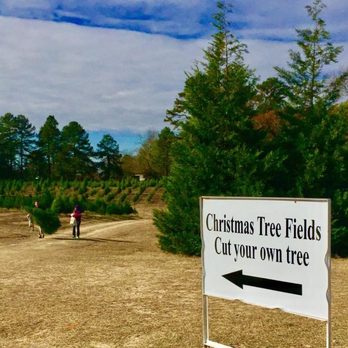 Motley's Tree Farm Field Arkansas