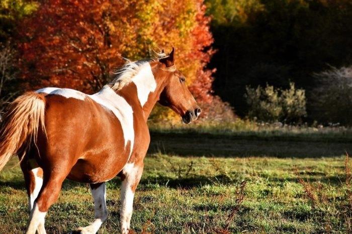Mountain View Trail Rides Horse West Virginia