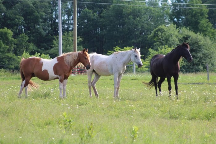 Mountain View Trail Rides Horses West Virginia