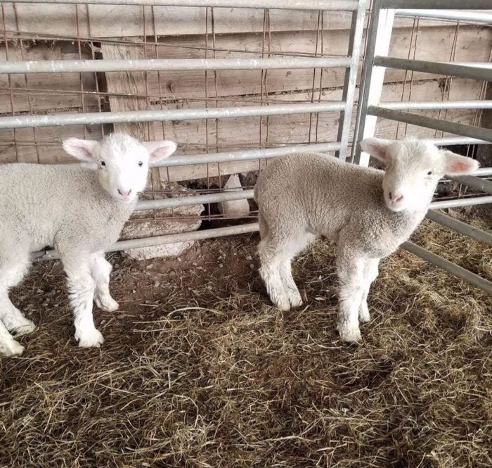 Mountain View Trail Rides Lambs West Virginia