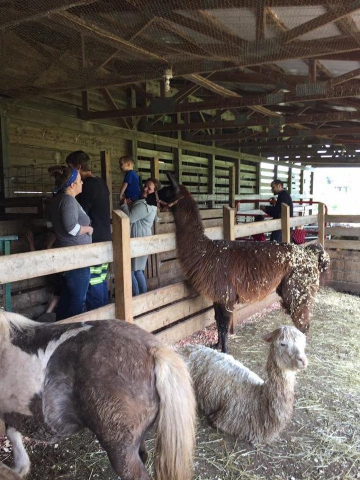 Mountain View Trail Rides Llamas West Virginia