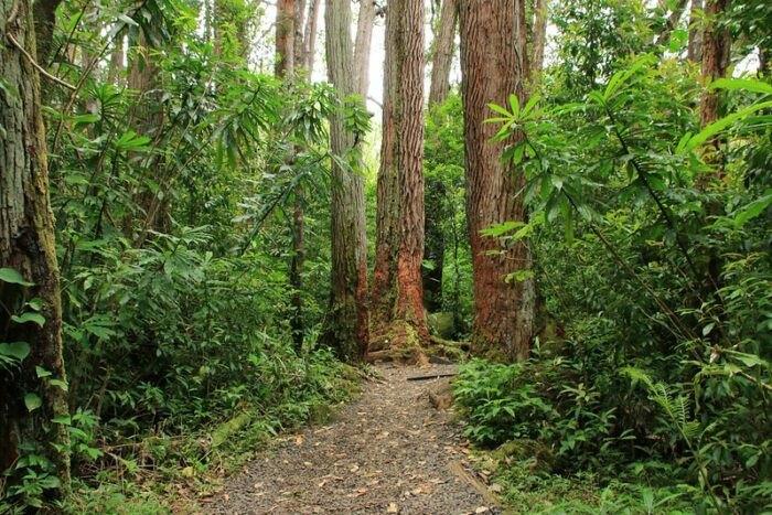 the Manoa Falls Trail in Hawaii