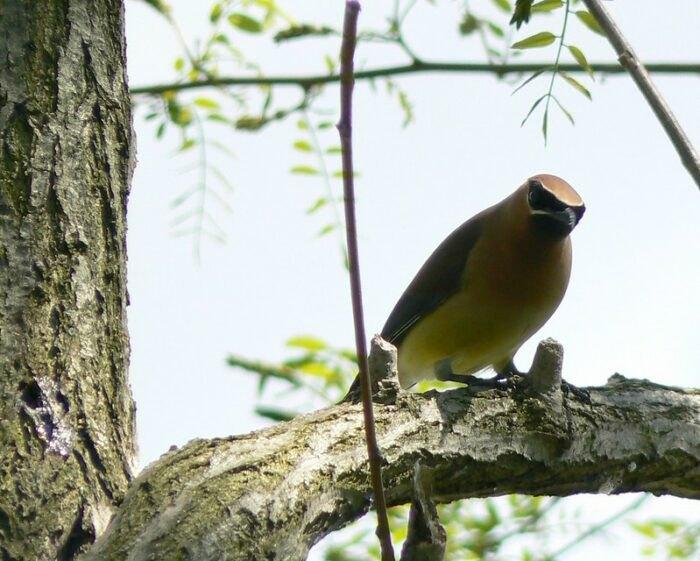 bird at Side Cut Metropark in Ohio