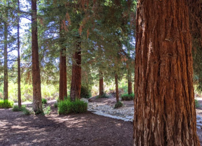 peace and quiet in Carbon Canyon Regional Park in California