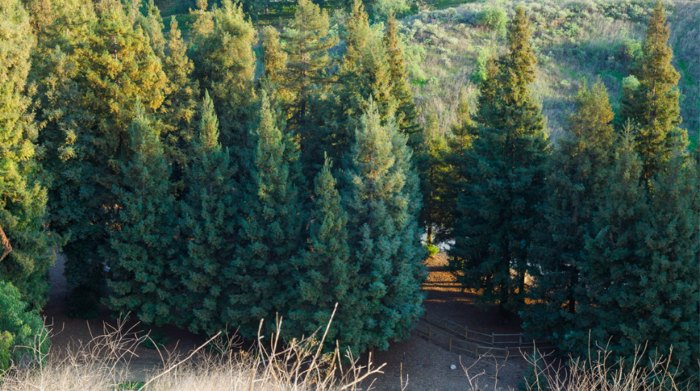 beautiful trees in Carbon Canyon Regional Park in California