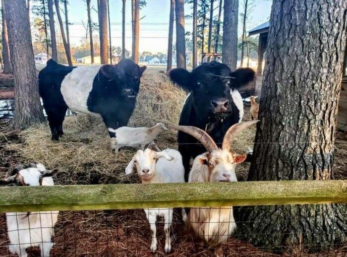 animals at Mike's Farm in North Carolina