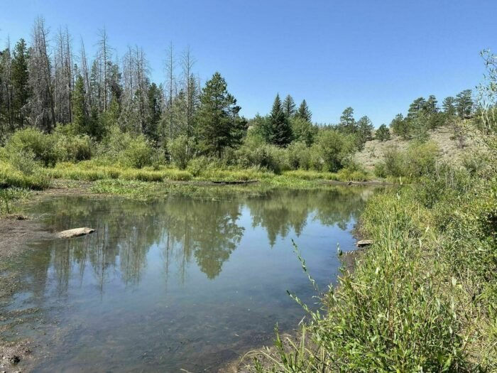 small pond on Turtle Rock Loop Trail in Wyoming