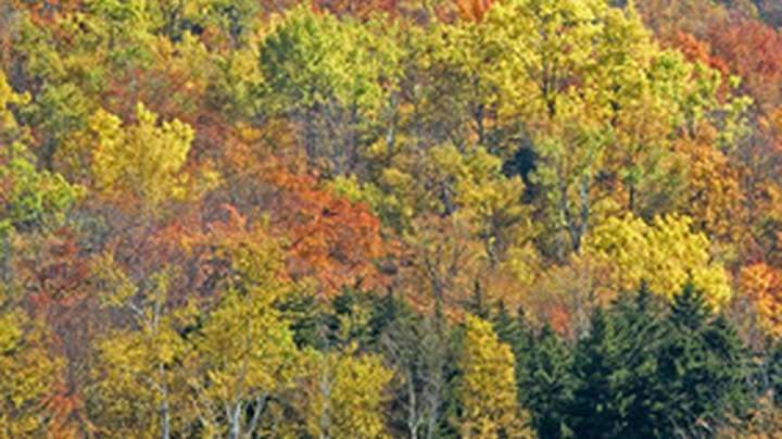 Mid-October is generally the peak of fall foliage season in New England. Visitors flock to the New Hampshire and Vermont mountains, the Berkshires in Massachusetts and the coast of Maine. Bus tours offer a variety of options. All-inclusive vacations cover lodging and meals. More bare-bones tours provide transportation and scheduled activities and passengers pay for hotels and food.