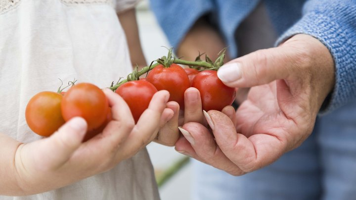 Tomatoes are actually citrus fruits, although they are cultivated and typically eaten as vegetables. As such, tomatoes contain relatively high levels of organic acids, such as citric acid, which strongly influence their flavors. The acid contents of tomatoes vary widely and depend on many factors, although certain acids are always more predominate than others.