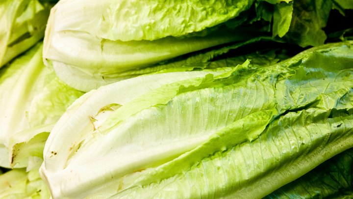 Most great salads begin with your favorite variety of leafy green lettuce. Lettuce adds crunch and volume to salads, sandwiches and wraps, but it's more than a tasty vegetable. Lettuce also contains important nutrients and antioxidants that can help keep you well.