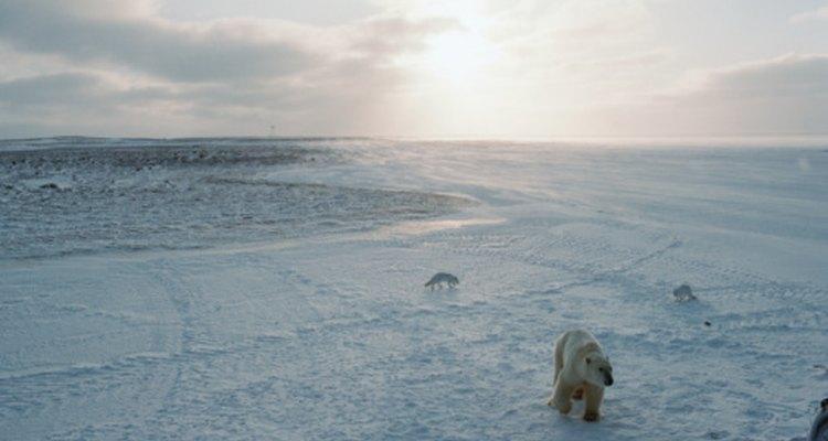 ¿Qué continentes están en la tundra?