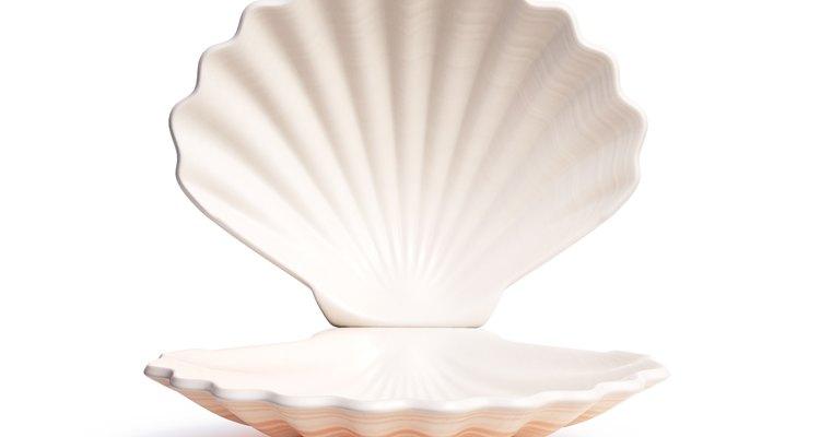 ¿Cómo se forman las conchas de mar?