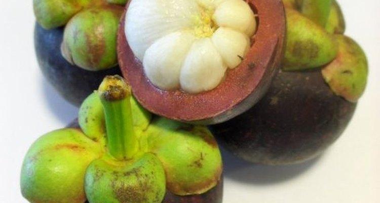 El mangostán es un árbol frutal de crecimiento extremadamente lento, ultra tropical.