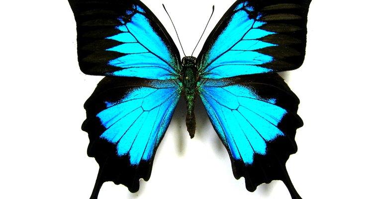 Las mariposas son una adorable temática para un baby shower.