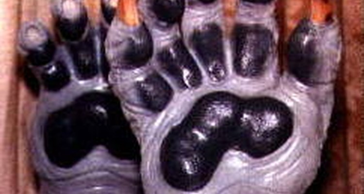 These paws were created with the help of latex paint.