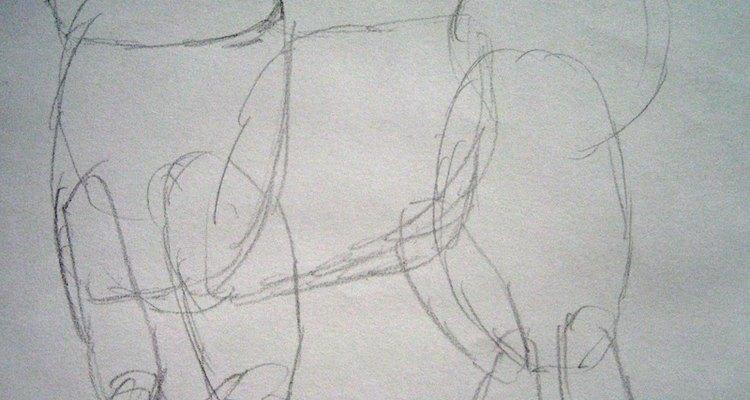 Draw the basic shapes that make up the Samoyed's body.