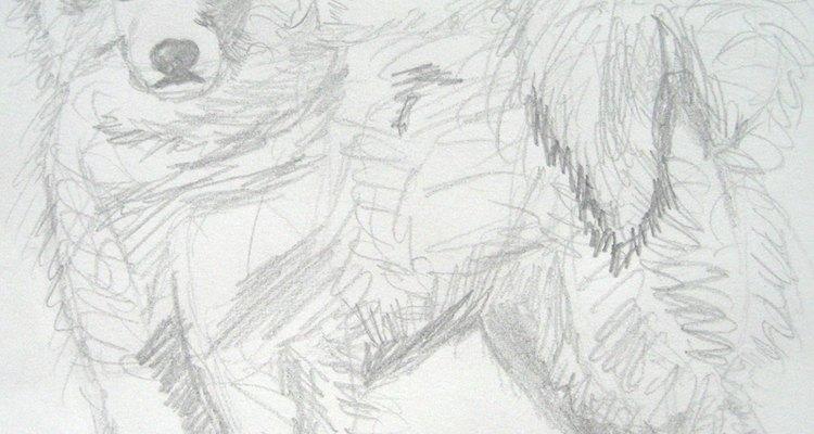 Samoyed. By Rachel Asher.