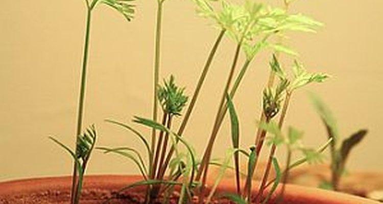 Germinar semillas.