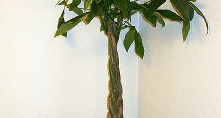 El árbol del dinero.