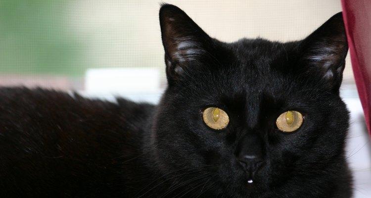 El comportamiento de un gato es a veces difícil de interpretar.