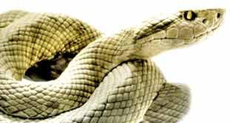 Siga os passos e livre-se de vez das cobras