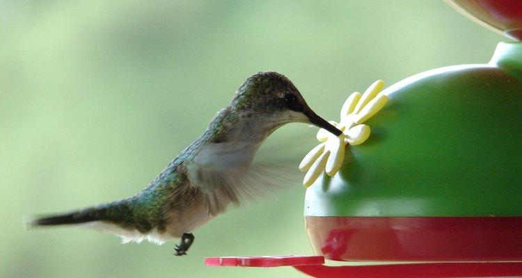 Los colibríes saben cuando dirigirse a climas más cálidos.