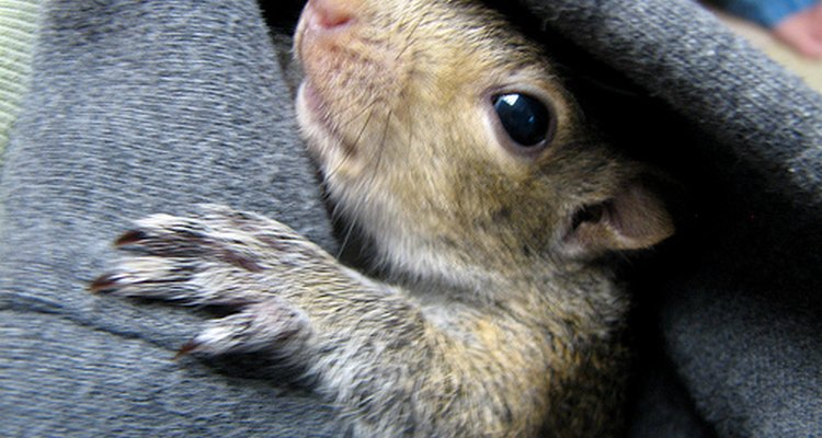 Esquilos devem ser devolvidos à natureza