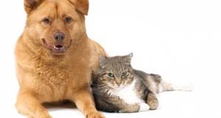 El anticongelante es altamente tóxico para los animales.