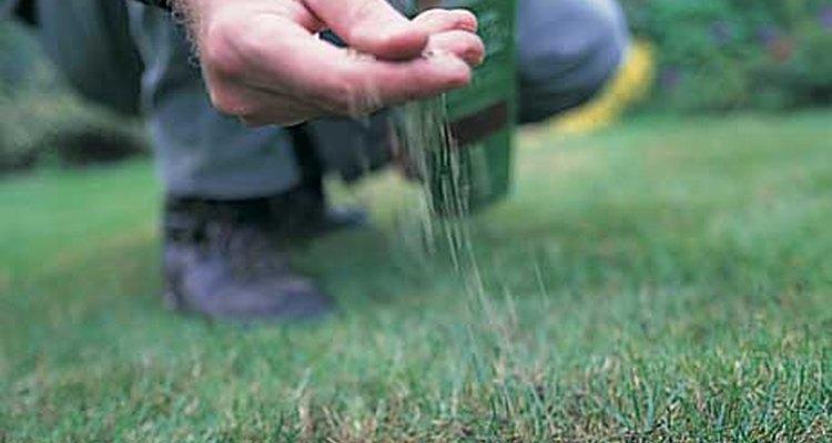 Casi todas las semillas habrán germinado y formado delgadas hojas verdes dentro de los 5 a 10 días de que fueron plantadas.