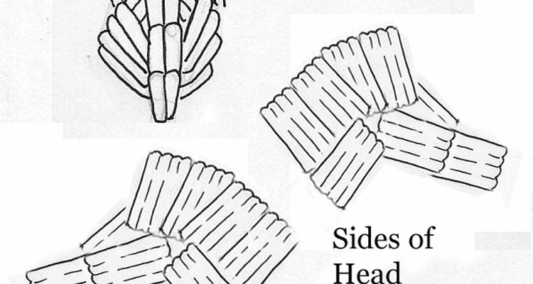 Front and sides of the head.