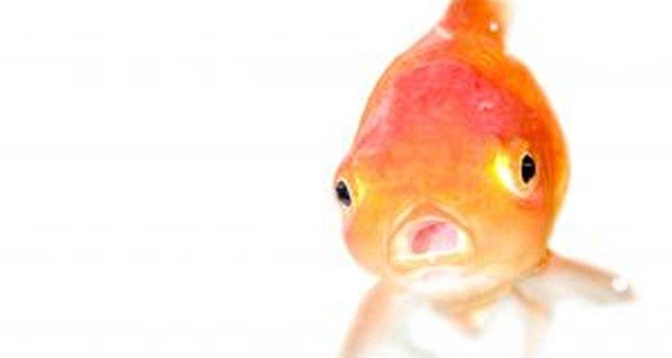 Los peces sufren cuando su agua se torna muy caliente.