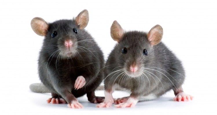 Elimina a esos animales rastreros en tu hogar.