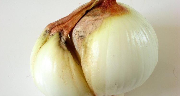 An onion bulb splitting to produce a separate, but genetically identical plant