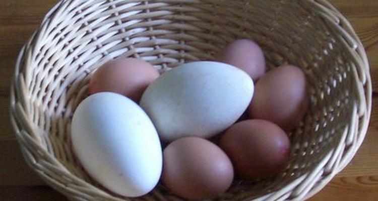 Goose eggs and jumbo chicken eggs